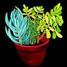 Succulent Pot by marlene veronique holdsworth