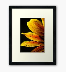 Yellow flower water droplets Framed Print