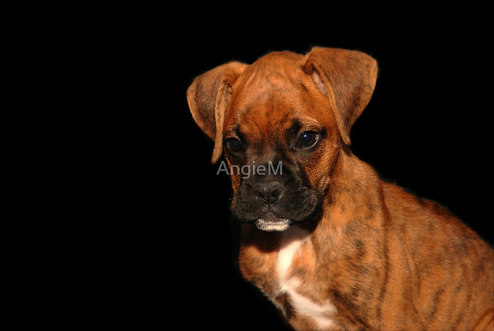 Boxer Puppy by Angie Tirado