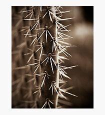 Prickles Photographic Print