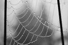 Morning Dew by Tori Snow