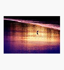 Great Egret Waits Patiently Photographic Print