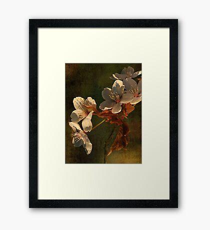 Spring Memory Framed Print