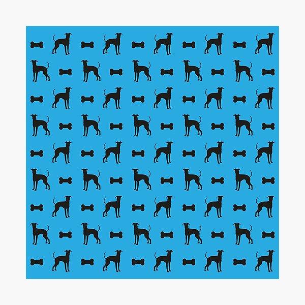 Dog and Bone - Lurcher - mini light blue Photographic Print