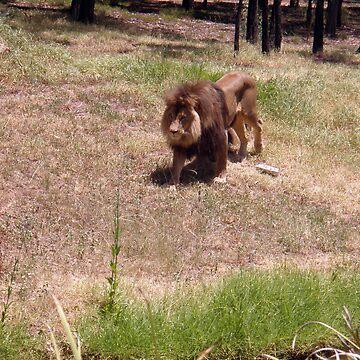 Lion (Issy age 5) by jeciaissy
