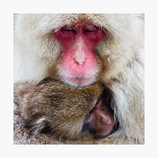 Wildlife Portrait - Snow Monkey Cuddle (Japan) Photographic Print