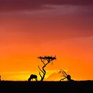 Africa Nature Silhouette - Sunset by Kellie Netherwood