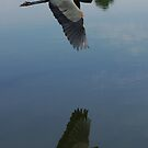 Flying by Paul Doucette