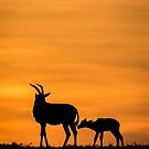 Africa Nature Silhouette by Kellie Netherwood