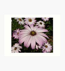 Purple Anemones Art Print