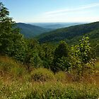 View from Skyline Drive by Bine