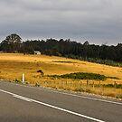 Tasmania by Gareth Bowell