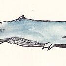 Whale by Abi Latham