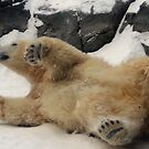 Paws-itively Great Pose by Larry Trupp