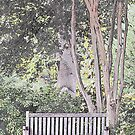 The Empty Park Bench by Sherry Hallemeier