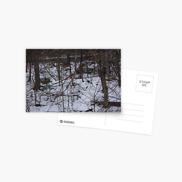 Hillsides and Snow   Postcard
