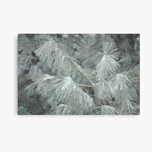 Frosty Transformation - With Sugar on Top Metal Print