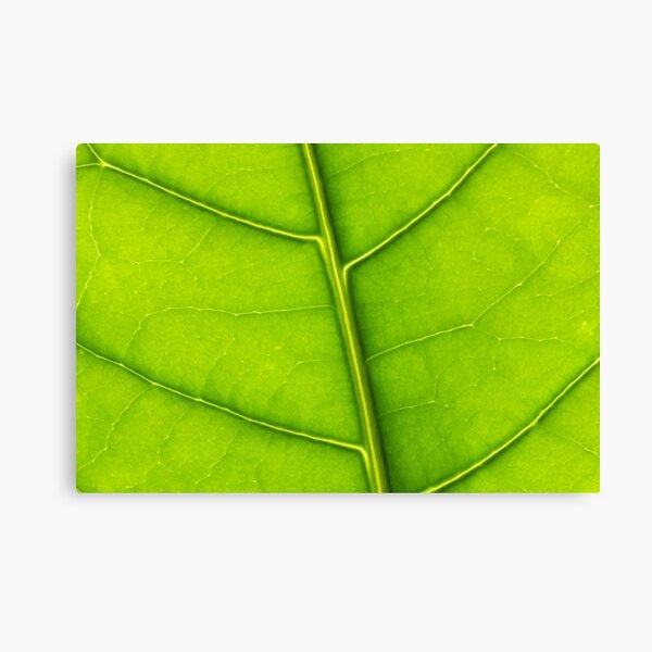 Eco green leaf Canvas Print