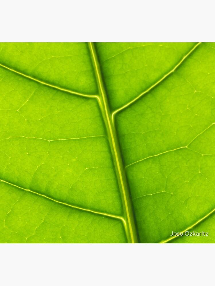 Eco green leaf by Joshollywood