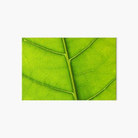Eco green leaf Art Board Print
