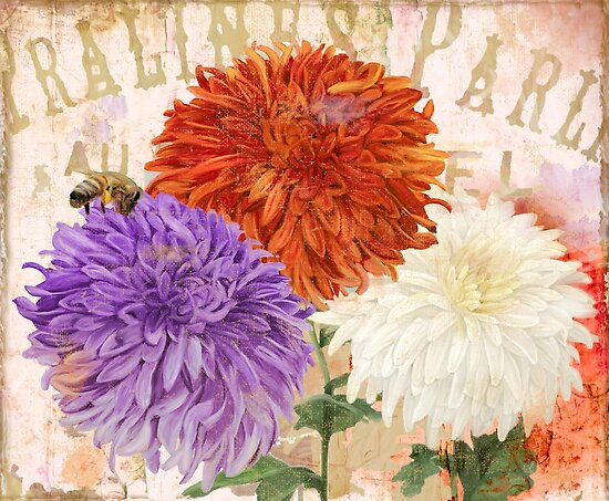 Autumn Chrysanthemums by mindydidit