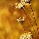golden by spiralsofwhite