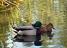 Mallard Duck Pair by Tori Snow