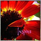 """Inspire"" quote stylish, red orange daisy close-up photo by Luceworks"