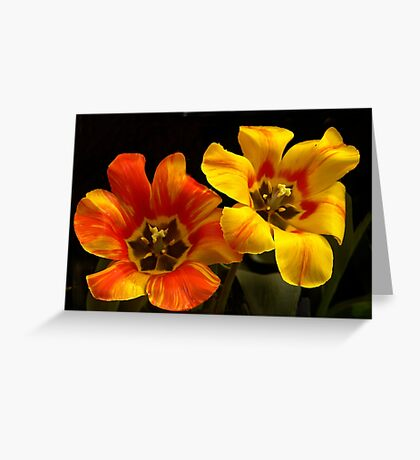 Tulip Duo Greeting Card