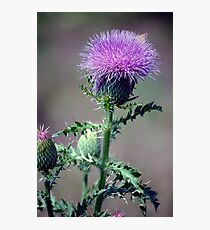 Thistle and Skipper Photographic Print