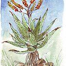 Aloe (A. marlothii) von Maree Clarkson