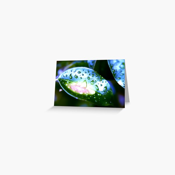 Leaf At Night Greeting Card