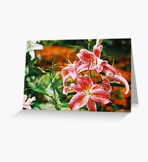 Rubrum Lilly Greeting Card
