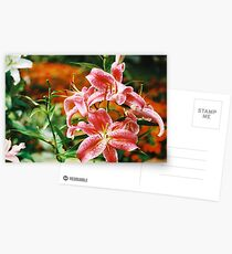 Rubrum Lilly Postcards