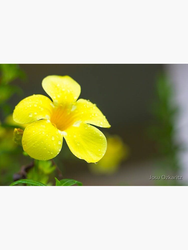 Yellow flower by Joshollywood
