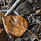 Fall by Brian R. Ewing