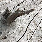 Driftwood by Brian R. Ewing