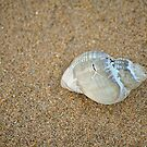 Beach Shell by Anthony Thomas