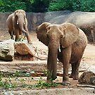 Les éléphants by Scott Mitchell