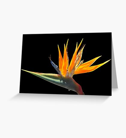 BIRD OF PARADISE (CARD) Greeting Card