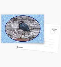 Little Blue Heron at the River Postcards