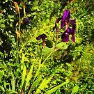 Iris near the Trail by jean-louis bouzou