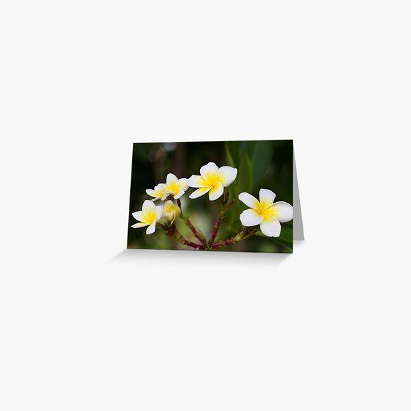 Frangipani leelawadee flowers Greeting Card