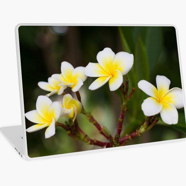Frangipani leelawadee flowers Laptop Skin