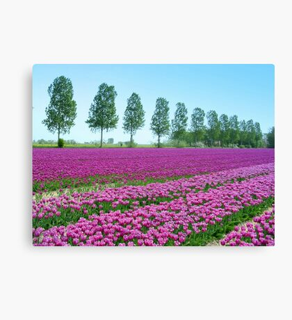 Purple Tulipfield Canvas Print