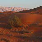 Desert Panorama 2 by David Clark