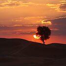Desert Sunset Panorama by David Clark
