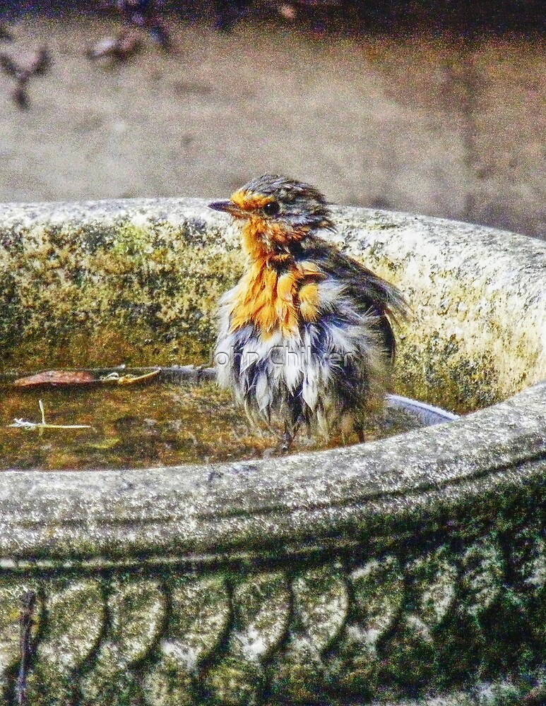 Bath Time for Robin by John Chilver