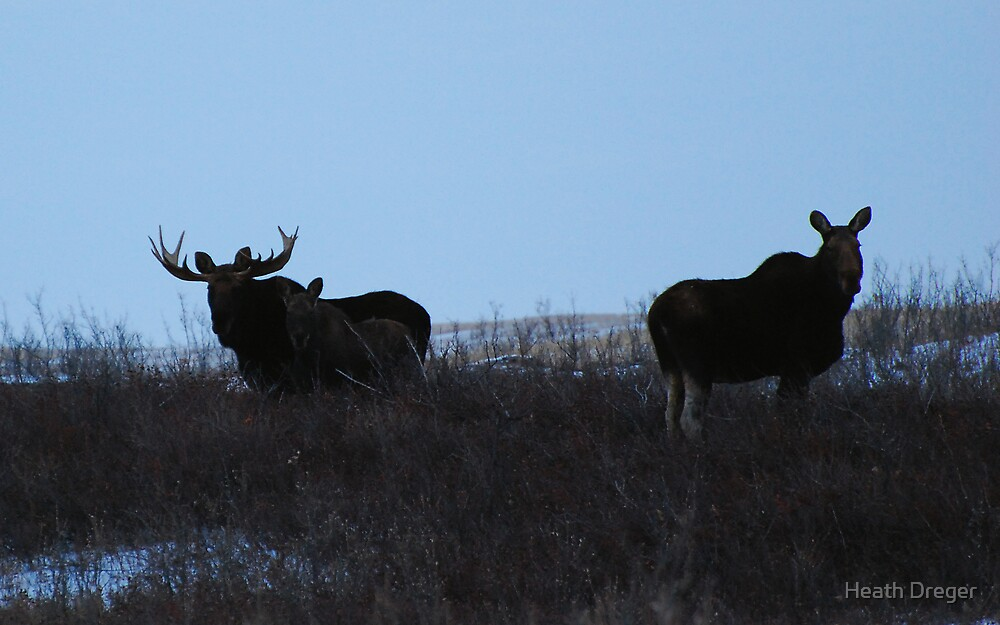 moose family photo by Heath Dreger