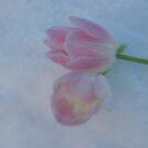 Frozen tulips by julie08